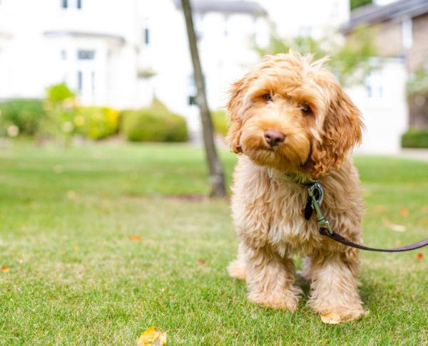 Burgess Hill Girls School Dog Jasper